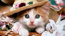 Humane Society-Cedar Creek Lake Hosting Pet Adoption at Cedar Creek Summer Expo June 8 2 kitty 2