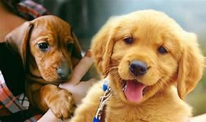 Humane Society-Cedar Creek Lake Hosting Pet Adoption at Cedar Creek Summer Expo June 8