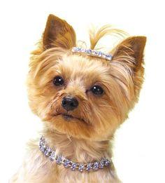 Beadazzling Doggie Jewelry
