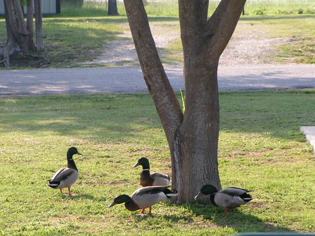LakeRidge RV Park