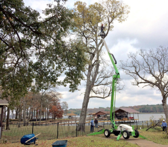 Arborist and Tree Management Service