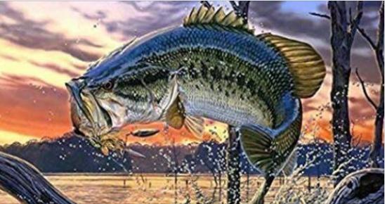 Cedar Creek Night Bass Tournament