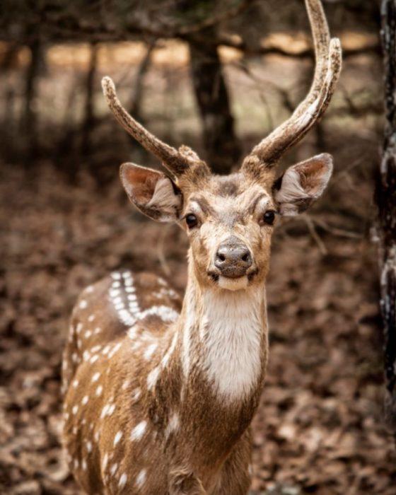 Rocky Ridge Drive-Thru Safari