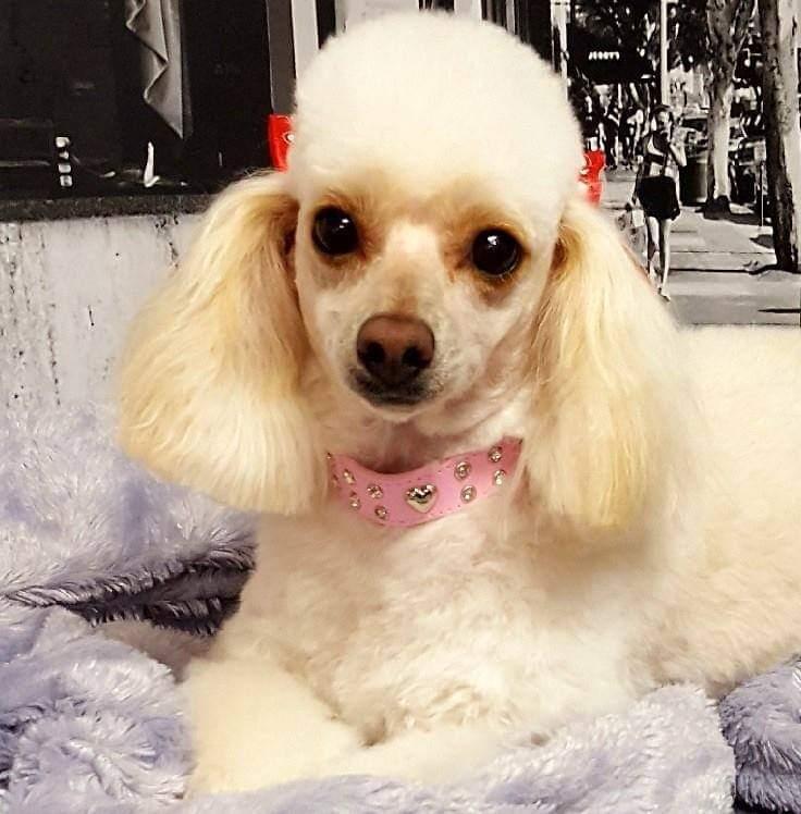 DREAMY DOGS PET SALON & HOTEL
